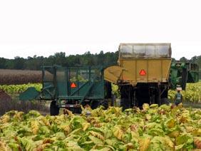 harvesting by machine